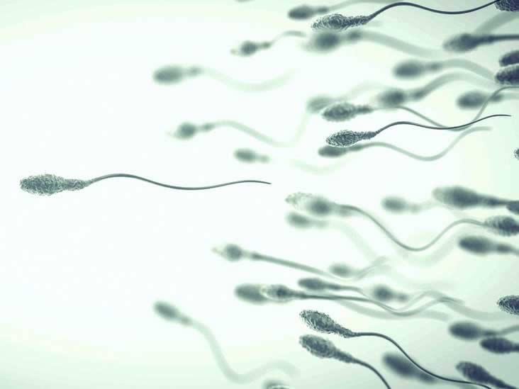 sperm morfoloji nedir