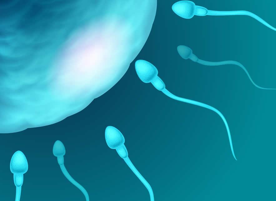 sperm morfoloji normal değerleri